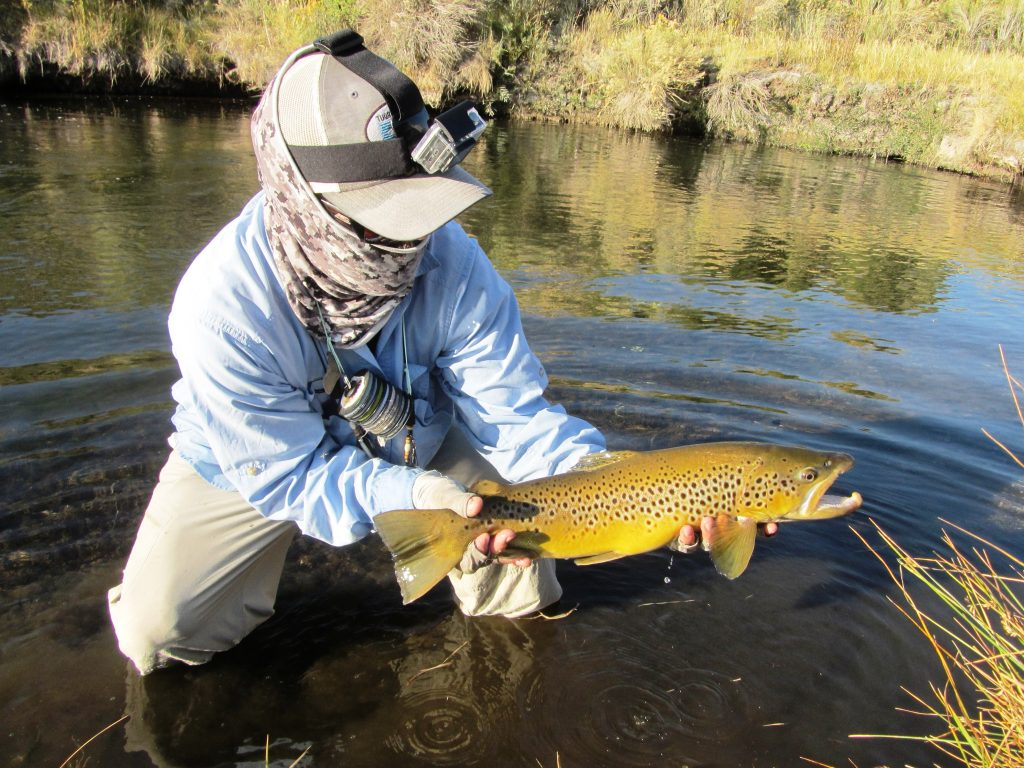 Mammoth Lakes Fly Fishing Brown Trout